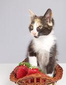 Kitty med jordgubbe — Stockfoto