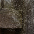 Messy Spider Web on Wood — Stock Photo