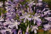 Purple Wild Flower — Stock Photo