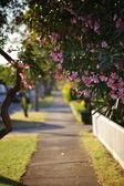Camino con flores en una tarde — Foto de Stock