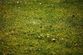 在绿色草地上的飞溅 — 图库照片