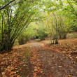 Stock Photo: Path in sardiniwoods