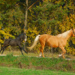 Stock Photo: Womwith mare and colt on morning jog