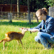 Beautiful girl feeds young deer — Stock Photo