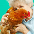 Portrait of grandmother with a cock — Stock Photo