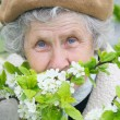 Stock Photo: Granny smells white flowers