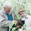 Happy old couple against a background of flowering garden with p — Stock fotografie