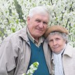Foto Stock: Happy old couple against a background of flowering garden