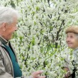 Senior couple play hide-and-seek among flowering garden — Stock Photo