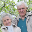 Stock Photo: Happy grandparents against a background of flowering garden