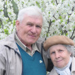 Happy old couple against a background of flowering garden — Stock Photo