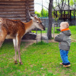 Little child playing with a young deer — Stock Photo