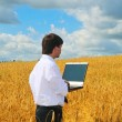 Businessman with notebook among yellow summer field — Stock Photo