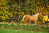 Woman with mare and colt on morning jog — Stock Photo