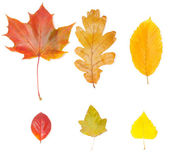 Collection of different leaves — Stock Photo