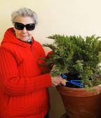 Granny with sunglasses grows plant — Stock Photo