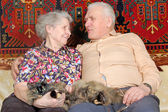 Happy seventy year old couple with cat — Stock Photo