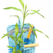 Green plant near basket with instrument - Stock fotografie