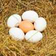 Six eggs — Stock Photo