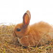 One rabbit sit on straw — Stock Photo