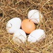 Five fresh eggs - Stock Photo