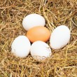 Stock Photo: Few eggs