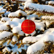Red ball on branch fir — Stock Photo