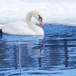 One swan swiming — Stock Photo #8915647