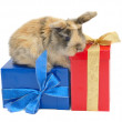 Rabbit on the boxes with gifts — Stock Photo