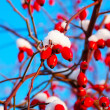 Berry of dog-rose on a sky background - Stock Photo