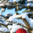 One red ball on branch fir — Stock Photo #8915877