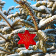 One red star on branch fir — Stock Photo