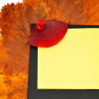 Red leaf to tack on notebook — Stock Photo
