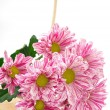 colorful chrysanthemums in canister — Stock Photo