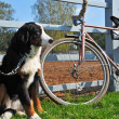 Big dog keep watch and warding the bike — Stock Photo