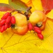 Apples and red barberry - Stock Photo