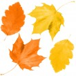 Set of fall leaves - Stock Photo