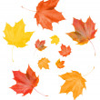 Maple fall leaves — Stock Photo