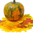 Fall leaves and pumpkin — Stock Photo