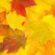 Royalty-Free Stock Photo: Background from autumn leaves