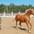 Baby horse and mare equine - Stock Photo