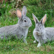 Fluffy rabbits on the green grass — Stock Photo #8916503