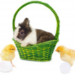 Royalty-Free Stock Photo: One rabbit in green basket and pretty chickens