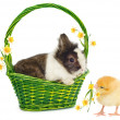 Royalty-Free Stock Photo: Rabbit in green basket and chicken