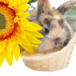 Rabbit with yellow flower - Stock Photo
