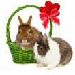 Royalty-Free Stock Photo: Rabbits and green basket with hearts