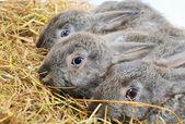 Three nice rabbit — Stock Photo