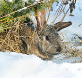 Rabbit sit under bush — Stock Photo