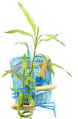 Green plant near basket with instrument — Stock Photo