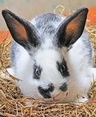 Tatlı bunny — Stok fotoğraf